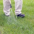 When to Apply Scotts Halts Crabgrass Preventer
