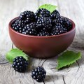 How to Grow Blackberries in Containers