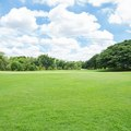 How To Take Care Of St. Augustine Grass