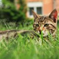 How to Remove Cat Urine Smell From Dirt