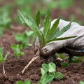 how to keep grass out of vegetable garden
