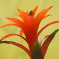 How to Identify My Bromeliad