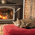 New York State Wood Stove Pipe Regulations