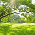 What Is the Best Grass Seed for Shade?