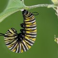 Common Types of Caterpillars in Tennessee
