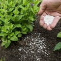 What Are Examples of Inorganic Fertilizers?