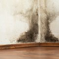 How to Kill Black Mold
