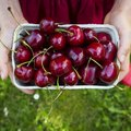 What Is the Difference Between Sweet Cherries & Sour Cherries?