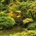 Tips for Designing  a Japanese Garden