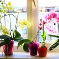 How to Care for Orchids