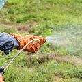 Which Weed Killers Contain Triclopyr?