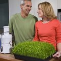 How to Take Care of Wheat Grass