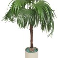 How to Repot a Majesty Palm Plant