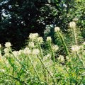 How to Clear Overgrown Weeds
