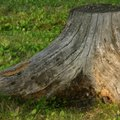 How to Make a Fake Tree Stump