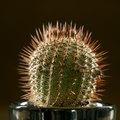 How to Ship a Cactus