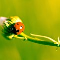 Plants That Ladybugs Like