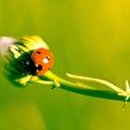 Plants That Ladybugs Like