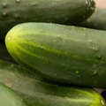 How to Grow Cucumbers in the Winter