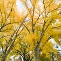 How to Calculate Tree Density