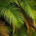 How to Care for a Palm Plant