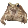 How to Keep Frogs & Toads Off My Porch