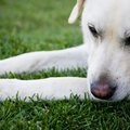 Lawn Treatment for Mange Mites