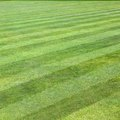 Bermuda Grass Vs. Bahia Grass in Florida