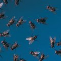 How to Get Rid of Bugs and Midges in the Yard