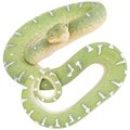 What Works to Repel Snakes?