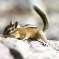How to Keep Chipmunks Out of Your Flower Beds
