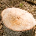How to Seal Tree Stumps