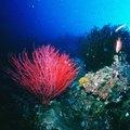 Deep Ocean Plants