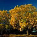 What Is the Difference Between White Oak & Red Oak?