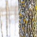 Tree Bark Removal Tools