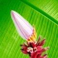 How to Winterize a Banana Tree Plant