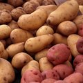 When Should I Plant Fall Potatoes?
