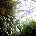 How to Make a Greenhouse Whitewash