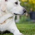How to Use Dolomite Lime on Grass for Dog Urine Damage