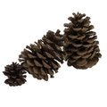 Can I Burn Pine Cones in the Fireplace?