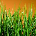 Can I Plant Grass Seed in October?