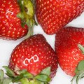 How to Keep Bugs From Eating Strawberries