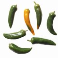 When to Pick Inferno Peppers