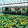 What Direction Should a Greenhouse Face?