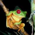 Rainforest Adaptation