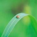 How to Get Rid of Orange Ladybugs