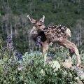 Types of Flowers That Deer Won't Eat