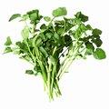 List of Edible Aquatic Plants