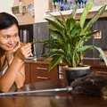 Indoor Plants That Reduce Dust