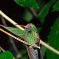 A Planned Perennial Butterfly-Hummingbird Garden